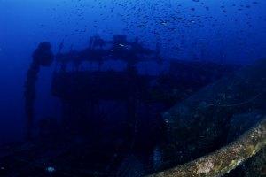 Εντυπωσιακή άποψη με τα μαγιάτικα και όλα τα άλλα υπ�ροχα πλάσματα του θαυμαστού υποβρύχιου κόσμου!